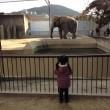 京都市動物園 ぞう