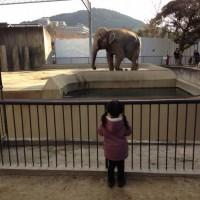 【平安神宮近くの京都市動物園】歴史の長い京都市唯一の動物園