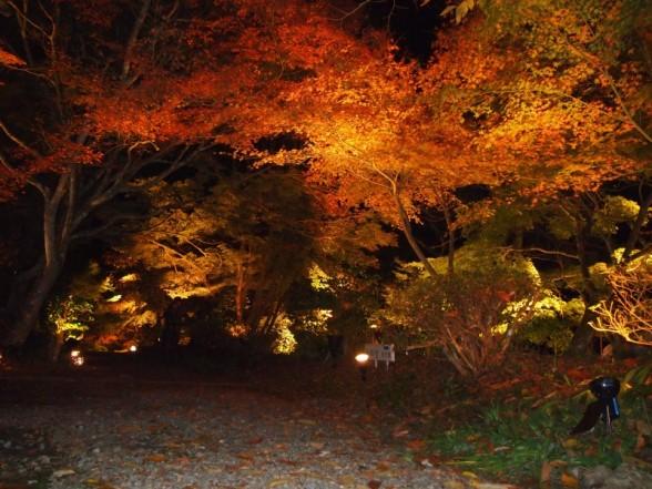 神蔵寺 ライトアップ 境内