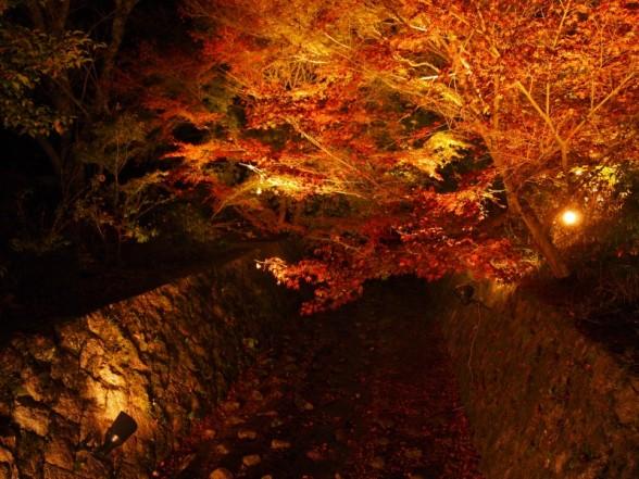 神蔵寺 ライトアップ