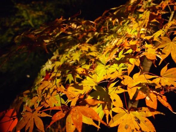 神蔵寺 紅葉 落ち葉