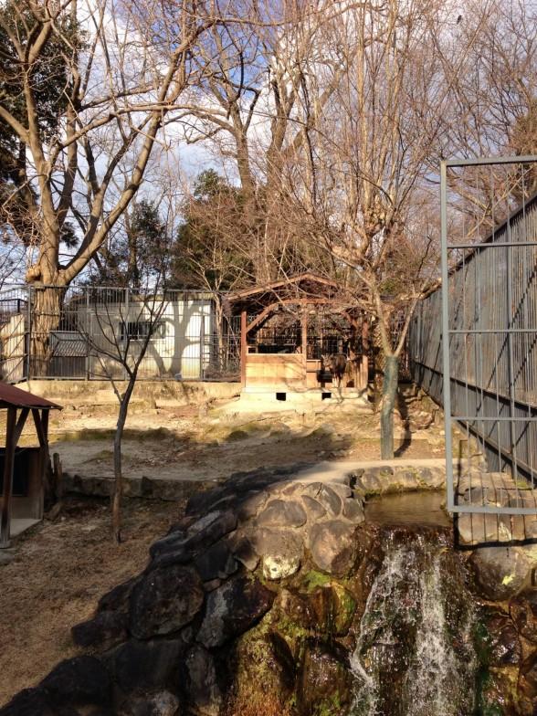 京都市動物園 園内