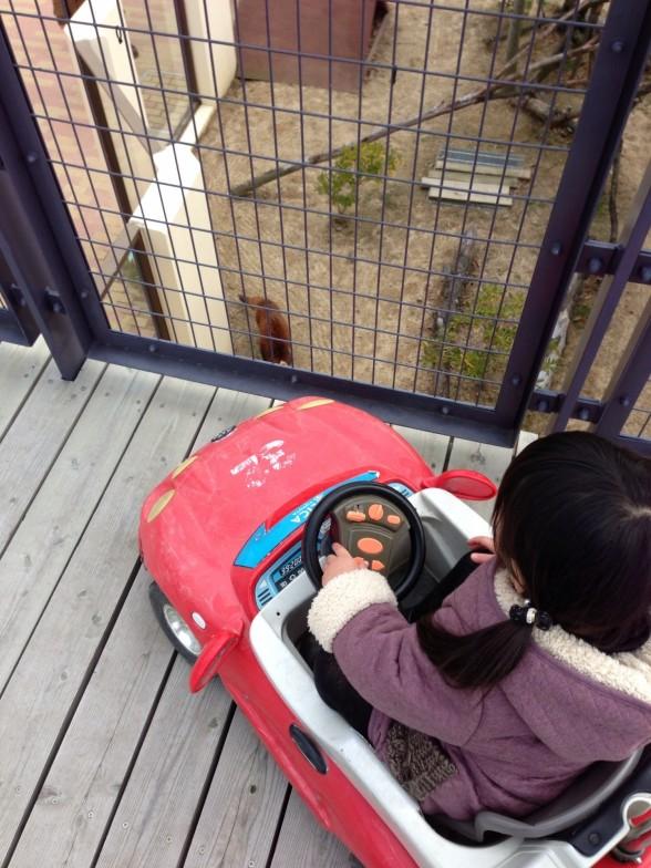 京都市動物園 乗物