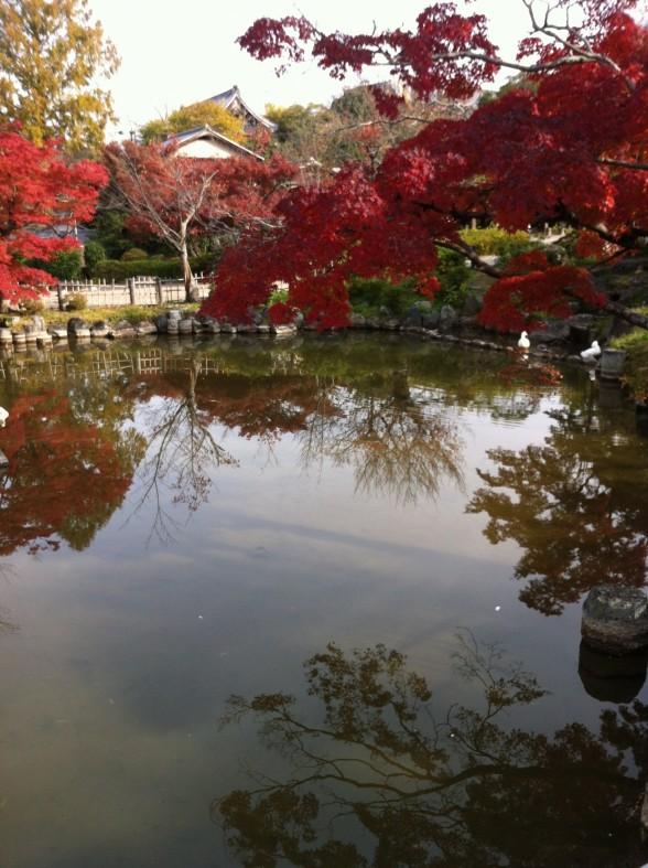 円山公園 紅葉と水面