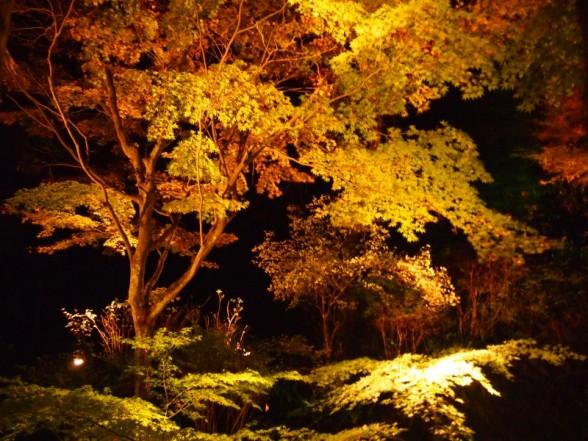 神蔵寺 紅葉 ライトアップ