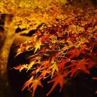 【亀岡 神藏寺の紅葉】オリンパス ペンを持って有名なライトアップスポットへ